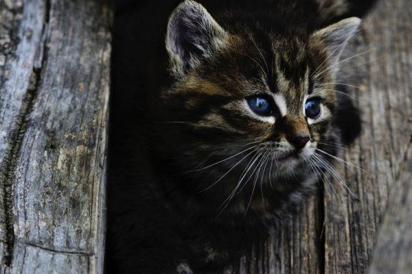 Le chat, un nouveau compagnon à la maison