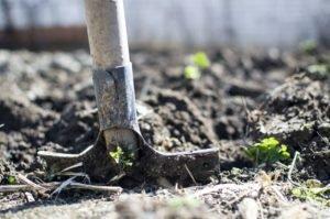 Bien entretenir ses outils de jardin en fin de saison