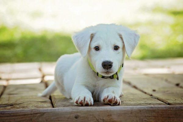 Animalerie ou refuge pour choisir son chien ?